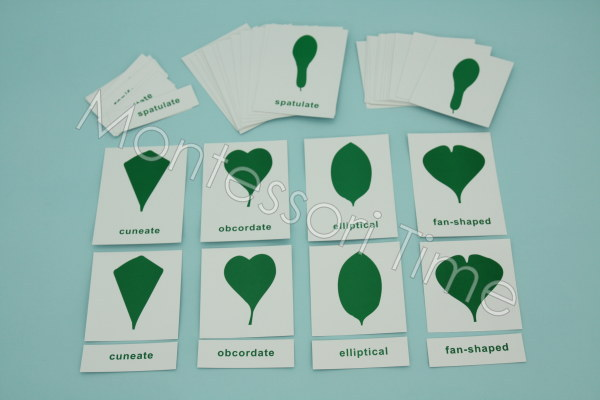 Botany Leafs Nomenclature Cards